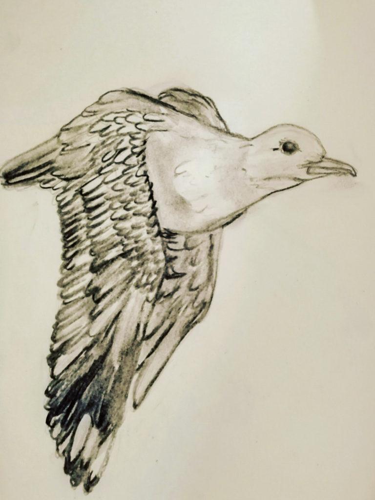 Schetsen van vogels - 2020 - ARTak