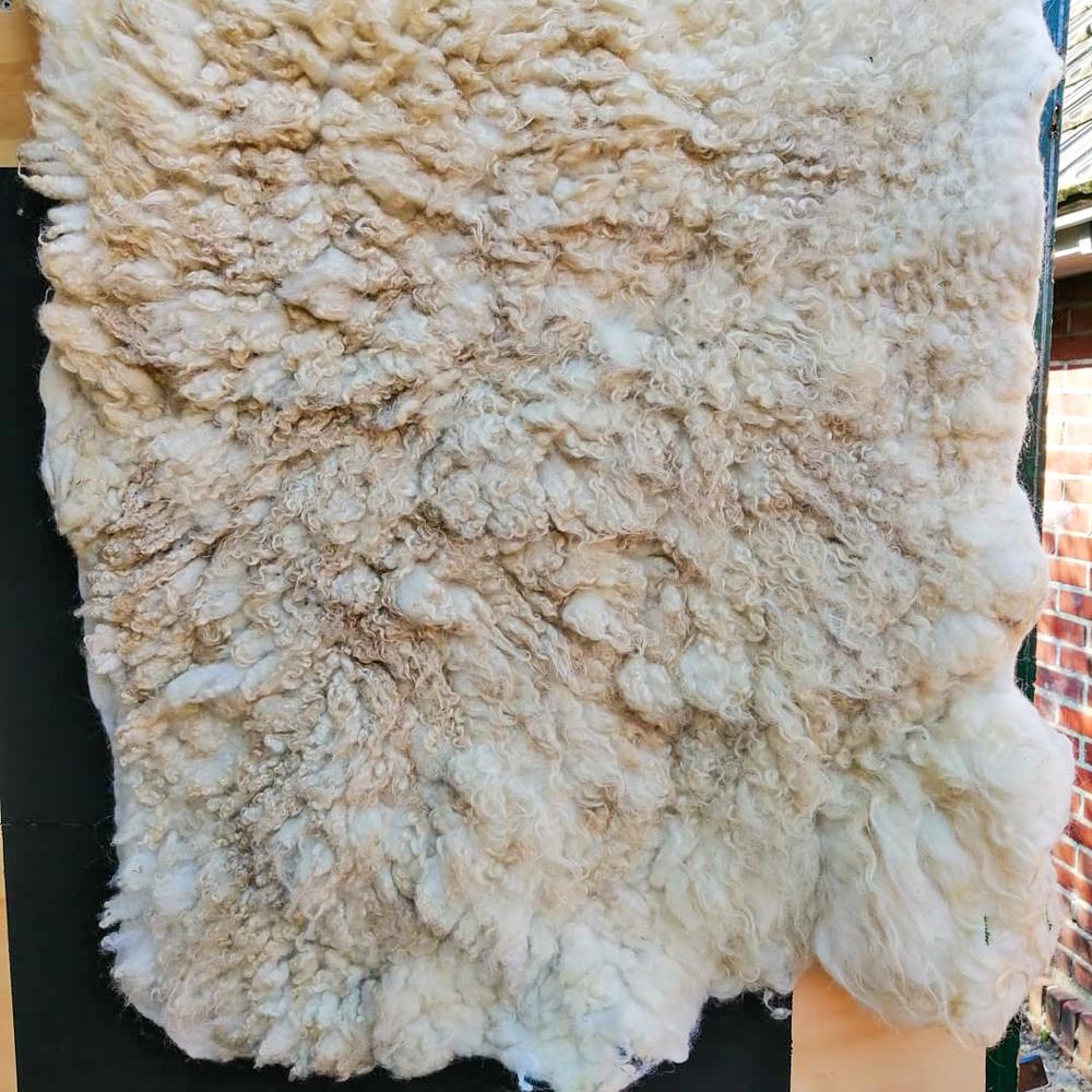 Tekeningen op schapenvacht - ARTak 2020